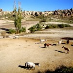 Cappadocia – The Land of Beautiful Horses