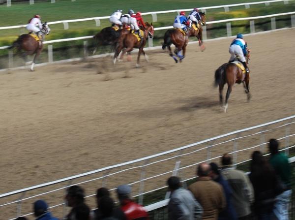 izmir horse racing
